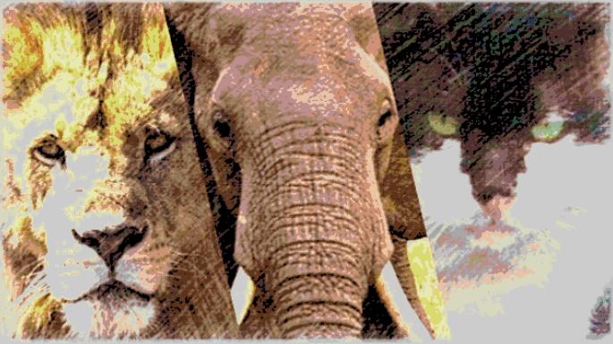 ネットビジネスのマインドセットで学ぶ動物が生きるための工夫と習慣